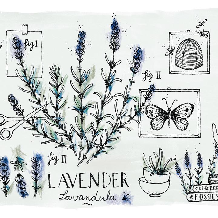 Botanicals Fresh Care | L'Oréal